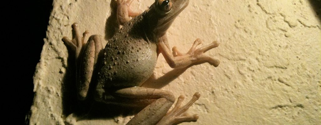Froggy Beautiful Creatures On A Wordless Wednesday