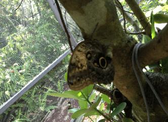 Buttefly-World-Florida-6