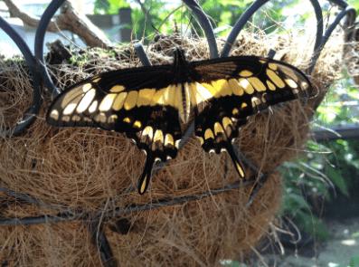 Buttefly-World-Florida-8