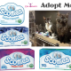 Scotties tissue Adopt Me Campaign