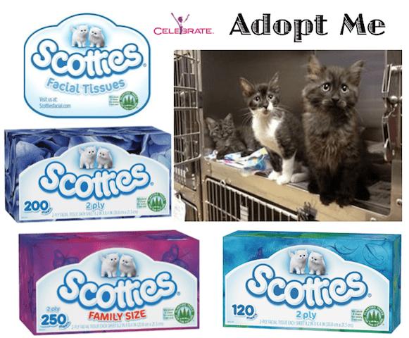 scotties facial tissue cat adoption
