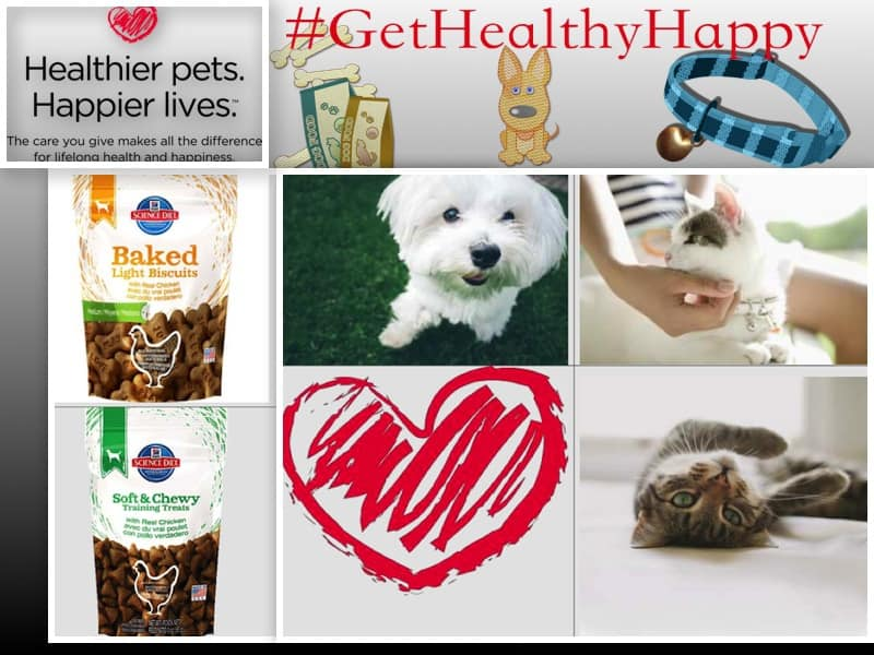 get healthy hills science diet campaign Hill's Science Diet Pet Prize Pack #Giveaway