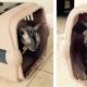 Richell Pet Carrier