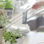 Herbs grown in the kitchen