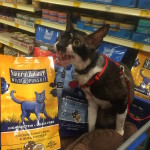 Visit Your Local PetSmart to Discover #NaturalBalance New Cat Food – Wild Pursuit