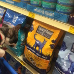 Your Cat Deserves a Fresh Start with Ancestral Diet of #NaturalBalance