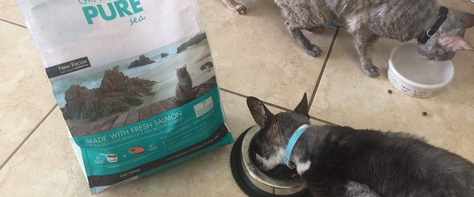 Feeding My Cornish Rexes A New Grain FREE CANIDAE® Pet Food #HealthyPetHappyPet