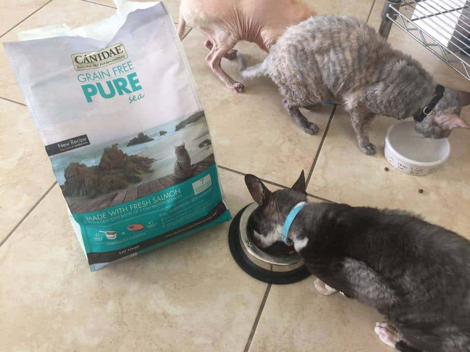 canidae cat food, grain free cat food