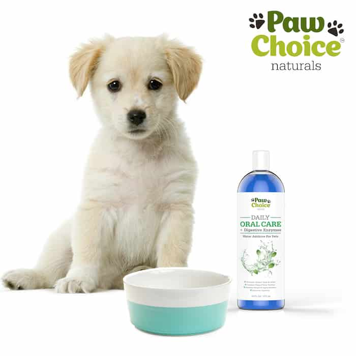 Paw Choice pet oral car, digestive enzymes
