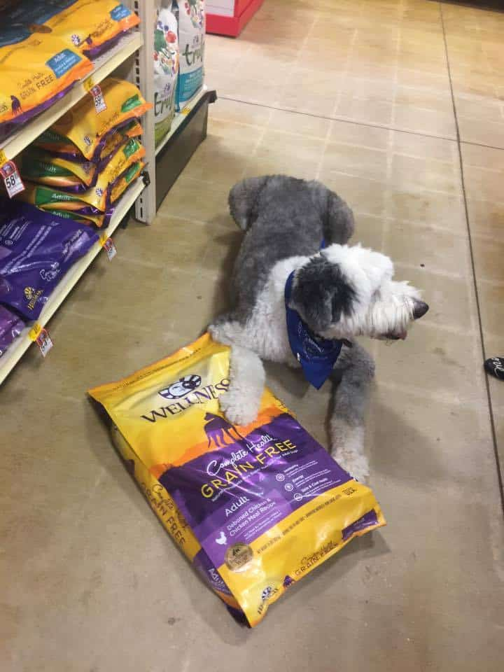 Wellness® Complete Health™ Dog Food and Snacks at PetSmart