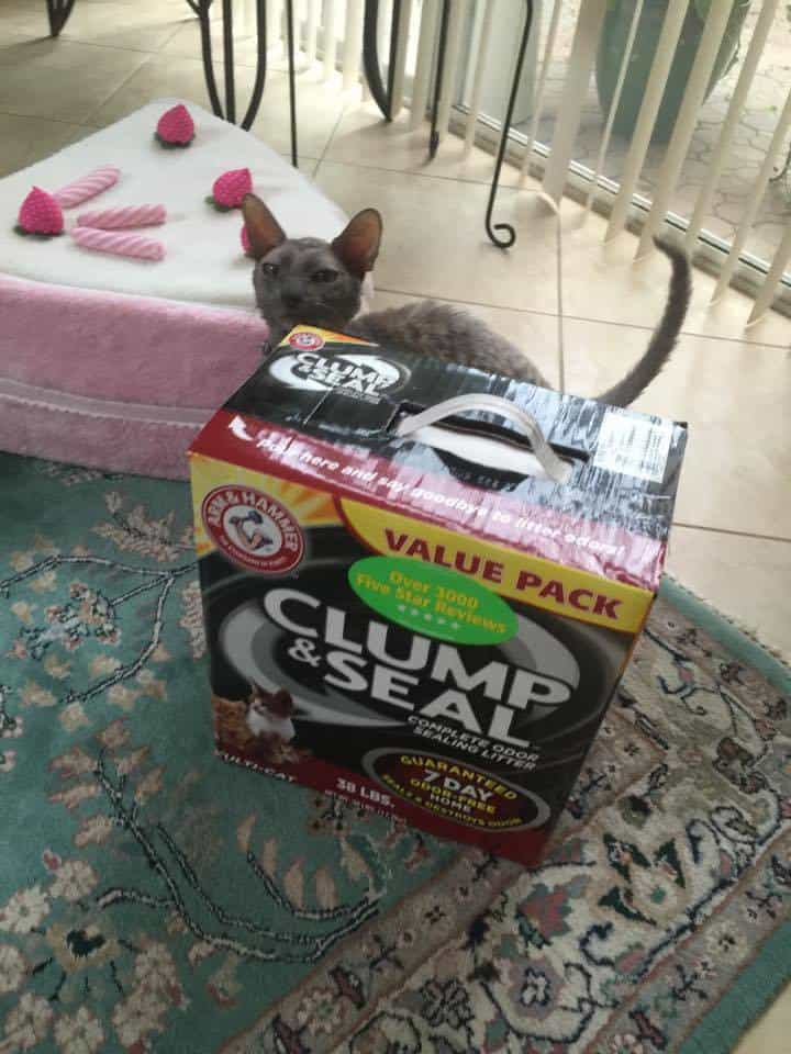 Arm & Hammer Clump & Seal Cat Litter