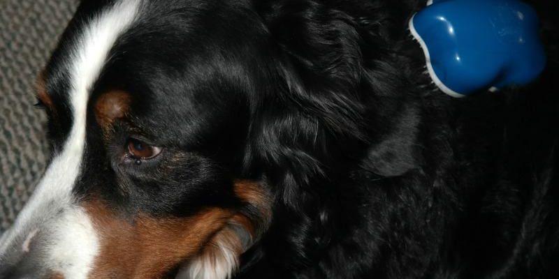 Win Dog Genie Grooming Pet Brushes #HeartThis #PetPalooza2