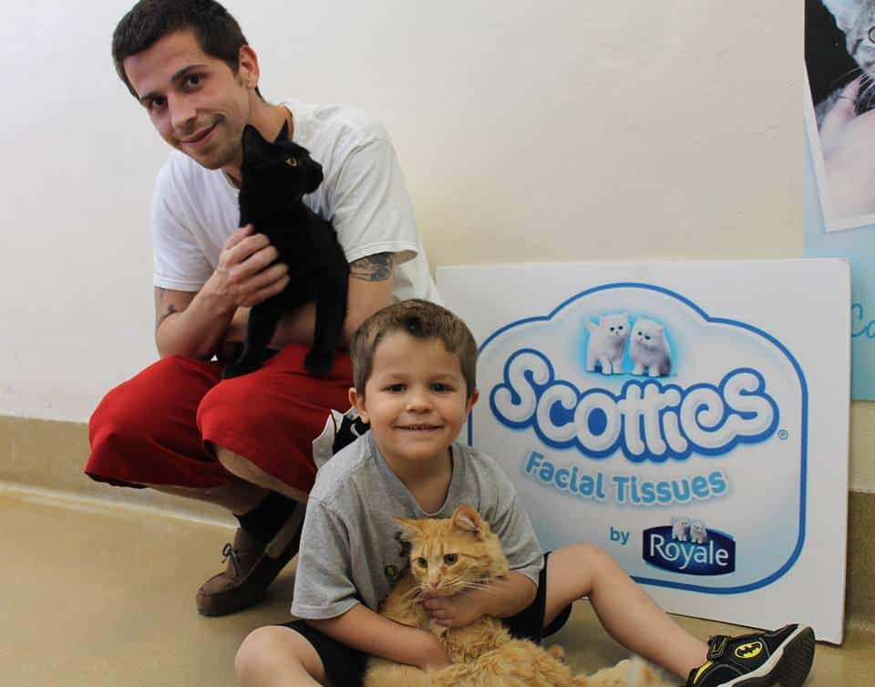 Scotties Cat Adoption