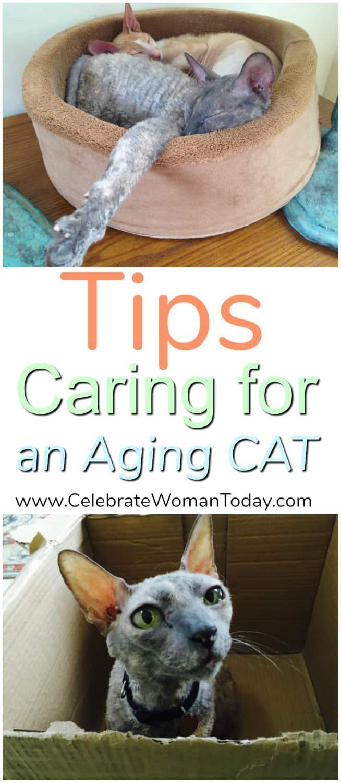 Cat to Vet Day, Cat Veterinarian, Aging Cat Health Tips