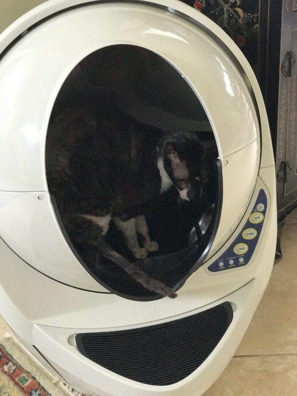 Litter Robot, Cat Litter Box