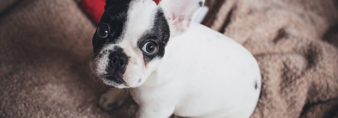 HOW-TO Train Your Puppy At Home With Robin Bennett! #RaisingPuppy