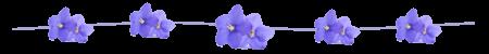 African violet string