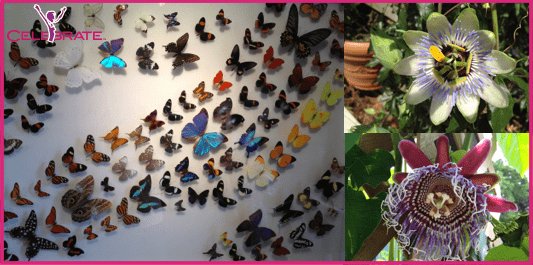 Butterfly World In Southern Florida Is A Dream Vacation Come True