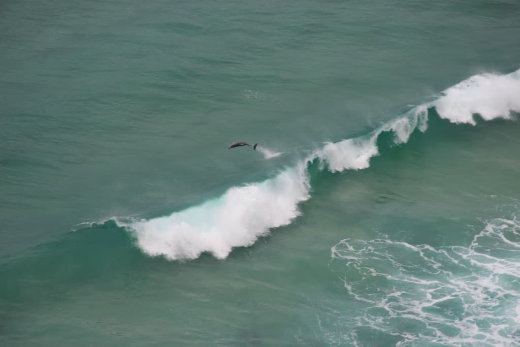 Australia-Cold Coast-Surfers Paradise-beash