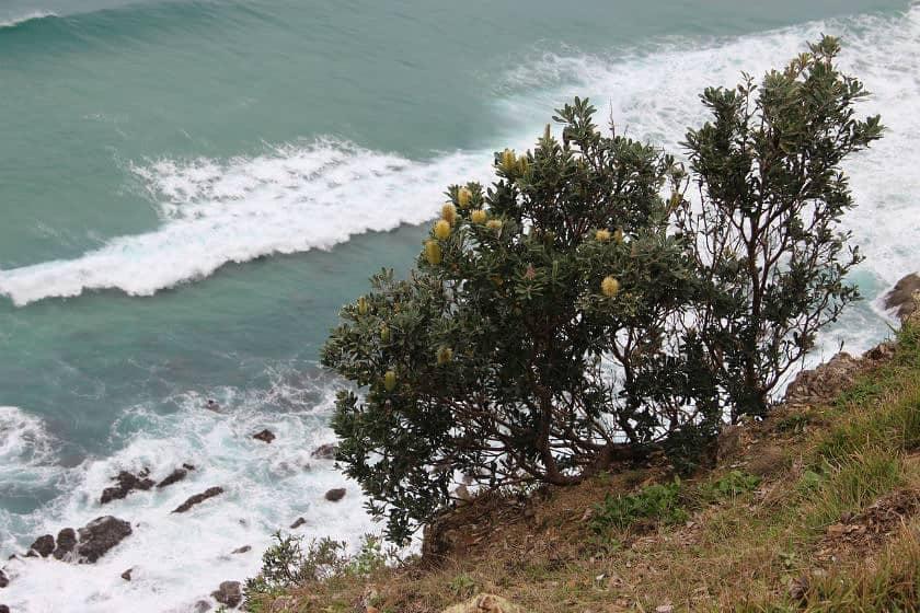 Australia-Gold Coast-Queensland