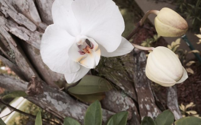 Wild Orchid on the Palm Tree on A Wordless Wednesday