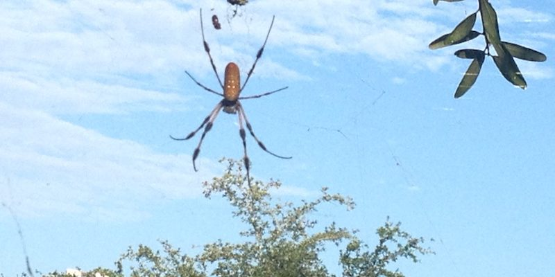 Spiders Come In All Sizes and Colors – #WordlessWednesday