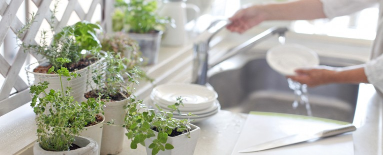 Herbs To Grow In Your Kitchen And Enjoy Fresh Every Day