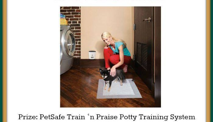 PetSafe Puppy Potty Training Made Easy – Learn And Win!