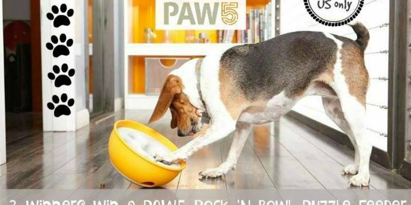 Make Food Time Fun With The PAW5 Rock 'N Bowl Puzzle Feeder