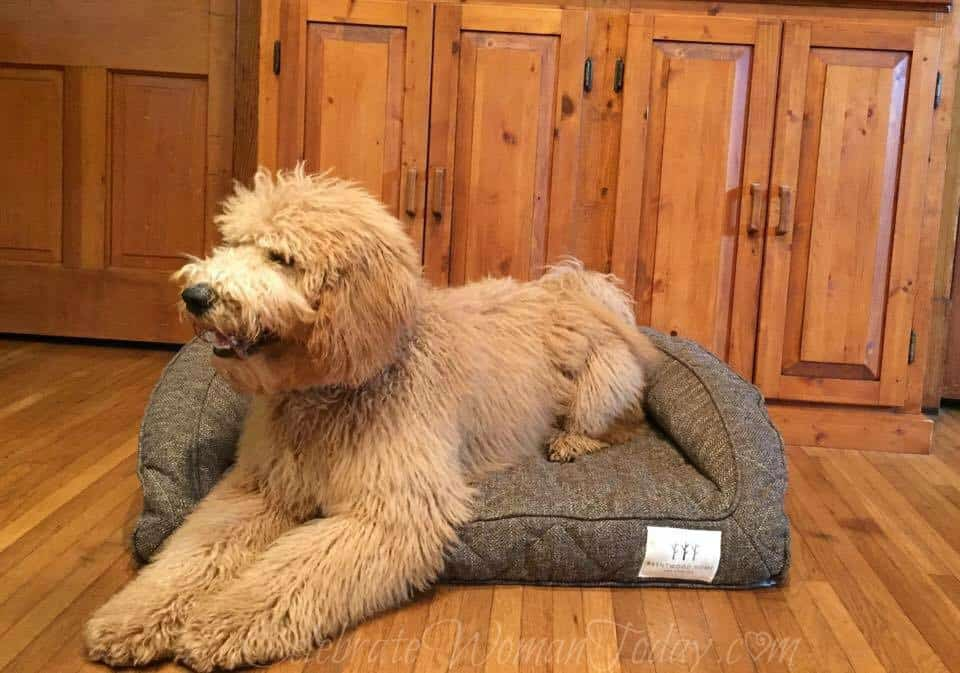 Brentwood Home Pet Bed