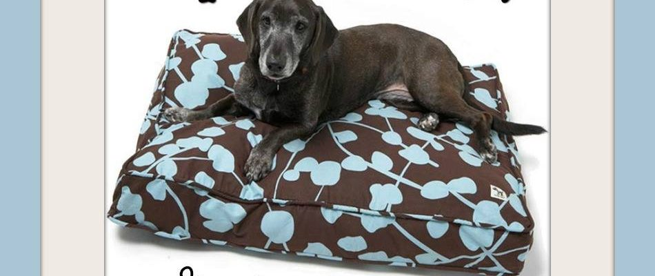 Win Molly Mutt Dog Duvet For The Pet In Your Home