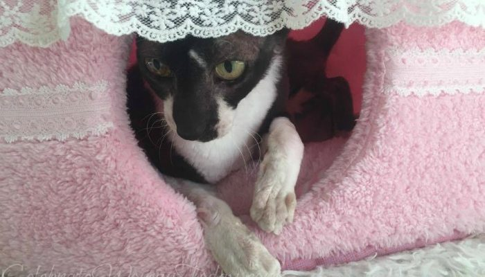Pink Cake Pet Bed To Celebrate #1SaveTaTas