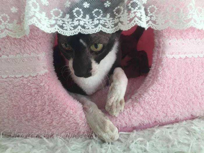Pink Cake Pet Bed, Best Pet Products for Cats