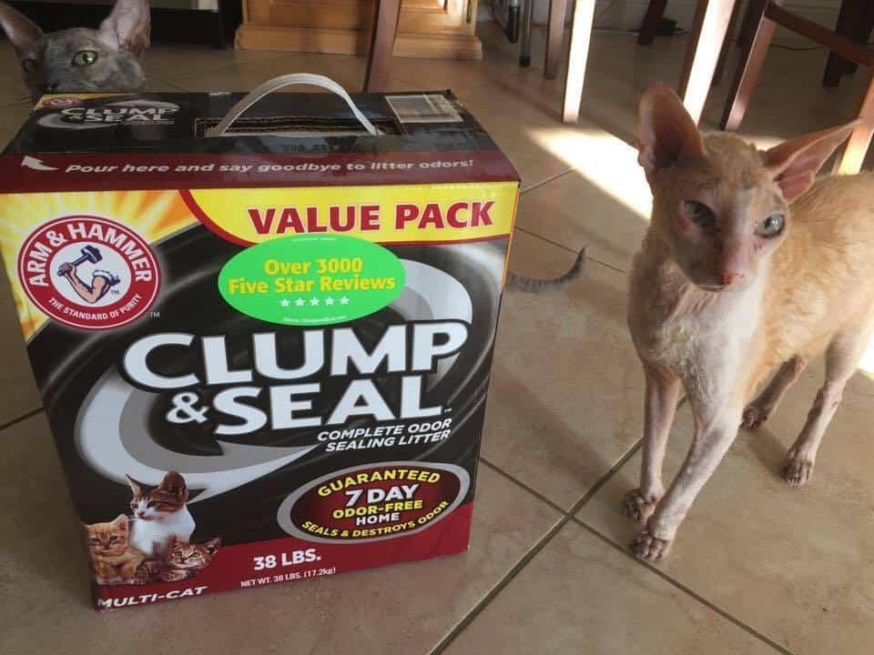 Arm & Hammer Clump & Seal Cat Litter