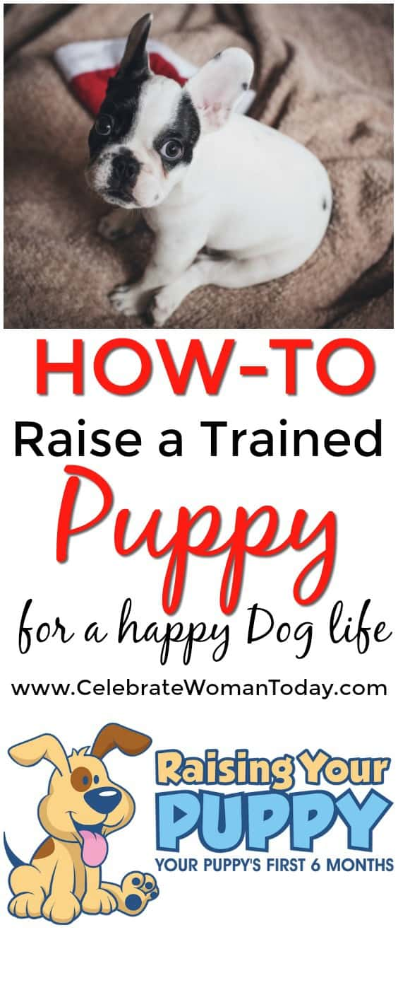 Robin Bennett, Training Your Puppy video course