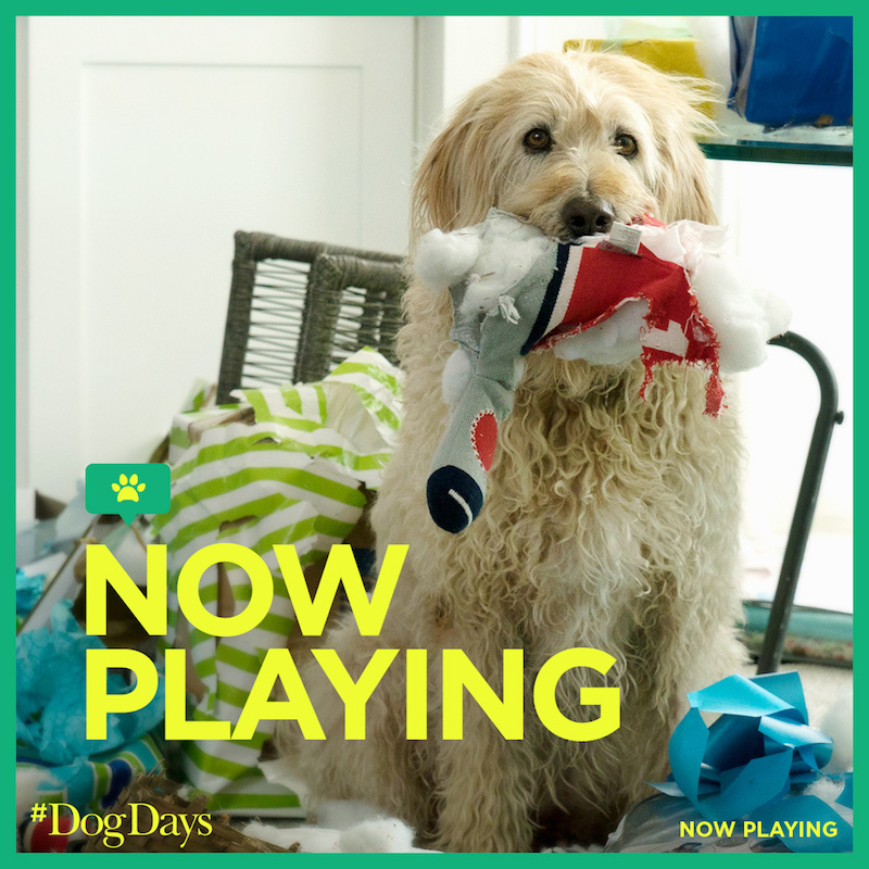 DOG DAYS MOVIE Red Carpet event