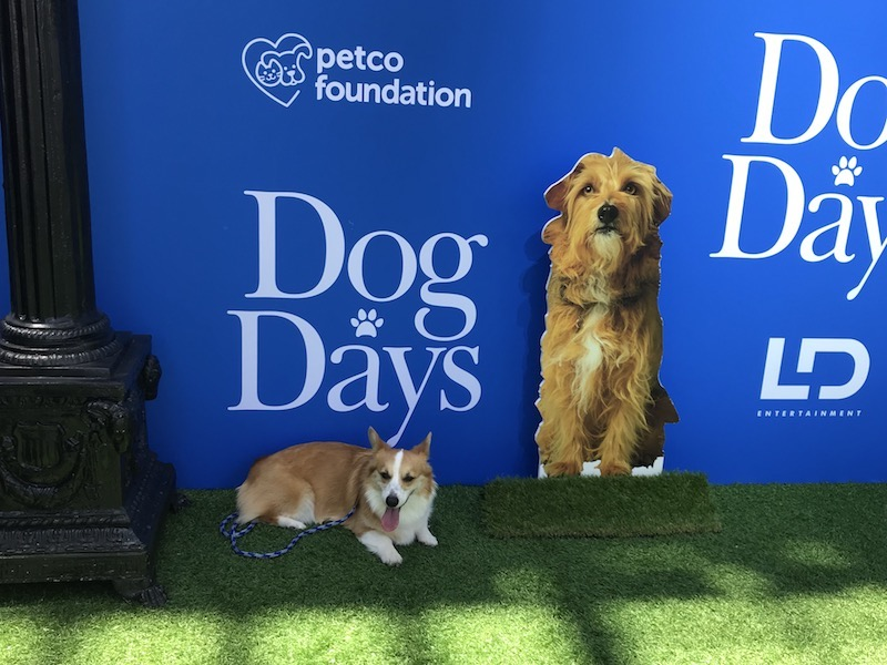 Here's this pooch who just wanted a bit of rest from heat during DOG DAYS Red Carpet Movie Premiere