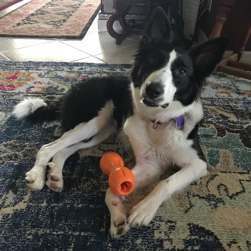 Home alone is not fun for dogs. Your dog needs engaging, interactive playtime. Here are quality and long-lasting toys to keep your dog busy while you work.